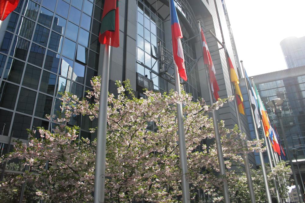 I Belgien, på bilden EU-parlamentet i Bryssel, lades 282 förhandsröster i kommunalvalet.