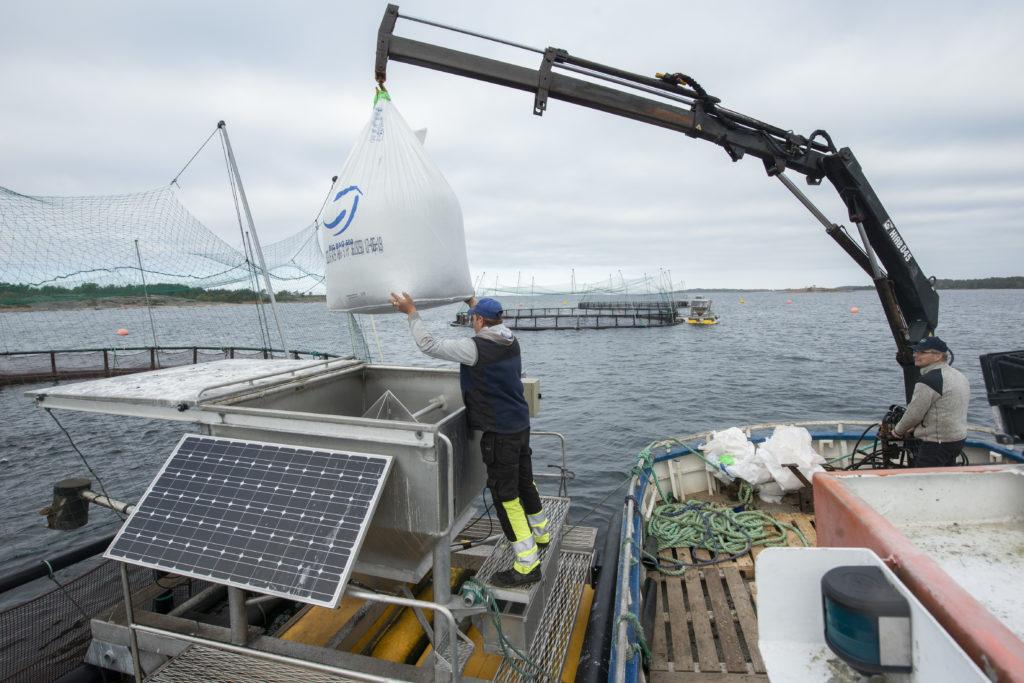 Martins Nikiforovs står vid fodersilon som finns vid varje kasse och ser till att fodersäcken på 500 kg hamnar rätt. Säckens botten skärs upp inne i silon.