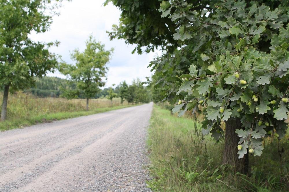 80 procent av det totala antalet vägkilometrar i Finland är enskilda vägar.